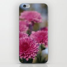Rosy Chrysanthemum with gold leaves, blue sky iPhone & iPod Skin
