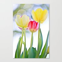 Cheerful Thoughts Canvas Print