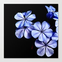 You Make My Flowers Blue Canvas Print