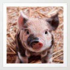 Sweet piglet Art Print