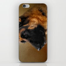 Best in Show - German Shepherd iPhone & iPod Skin