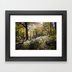 Montreal Autumn Framed Art Print