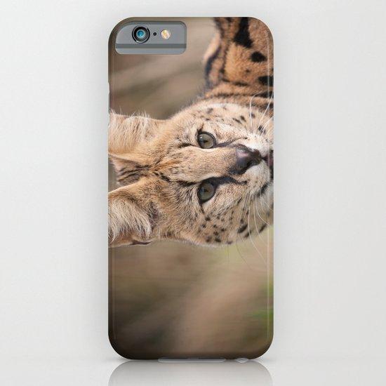 Serval Cat iPhone & iPod Case