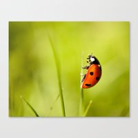 On top of a Grass Canvas Print