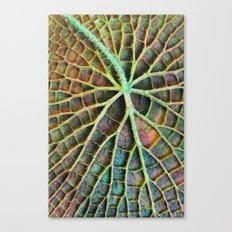 Lily pad Canvas Print