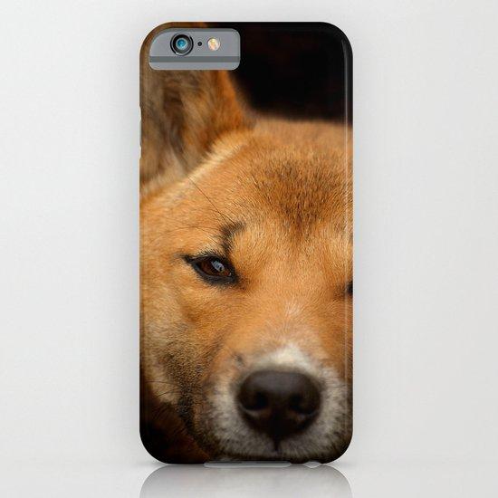 New Guinea Singing Dog iPhone & iPod Case