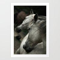 white horse Art Print
