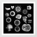 Fossil Corals Art Print