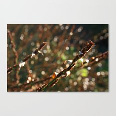 Macro photograph of a grass flower in the Botanic Garden in the sunligh Canvas Print