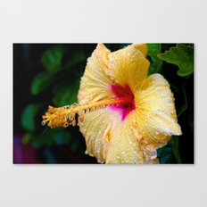 Wet Hibiscus version 2 Canvas Print