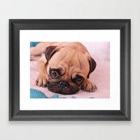Pug Before Nap Framed Art Print