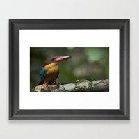 Stork Bill Framed Art Print
