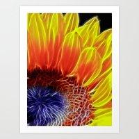 Sunflower Head Art Print