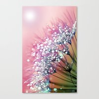 Rainbow Dandelion Canvas Print
