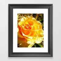 Roses IXX Framed Art Print