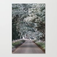 Hoar frost covered trees lining a rural road. Norfolk, UK. Canvas Print