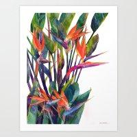 The bird of paradise Art Print