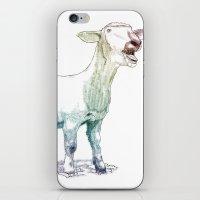 scream goat iPhone & iPod Skin