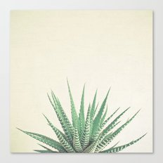 Haworthia Canvas Print