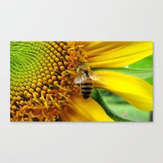 Pollination Canvas Print