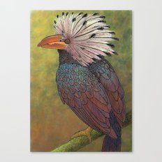 White Crested Hornbill Canvas Print