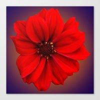 Red dahlia-bishop-of-llandaff Canvas Print
