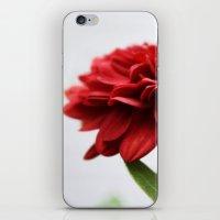 Chrysanthemum II iPhone & iPod Skin