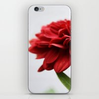 Chrysanthemum II iPhone & iPod Skin