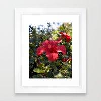 Hibiscus III Framed Art Print
