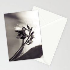 Field Dragon Stationery Cards