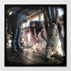 The Shearer and The Rouseabout - Through The Viewfinder (TTV) Canvas Print