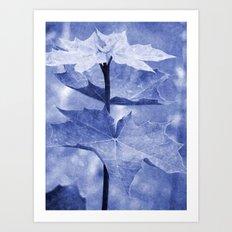 Blue Maple Leaf Art Print