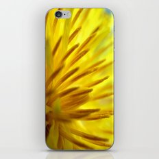 Dandelion Macro iPhone & iPod Skin