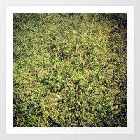 Grass 3 Art Print