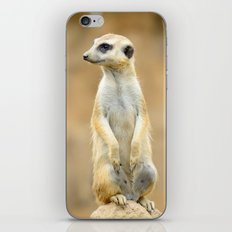 Meerkat on guard iPhone & iPod Skin
