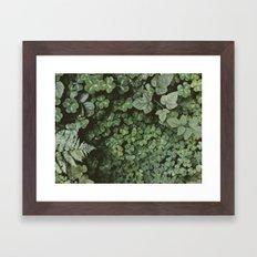 Wood Sorrel Framed Art Print