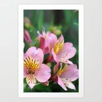 pink macro flowers Art Print