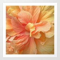 Tropical Peach Hibiscus Art Print