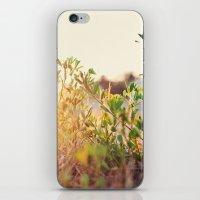 Sun Rising iPhone & iPod Skin