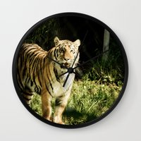 Tiger portrait Wall Clock