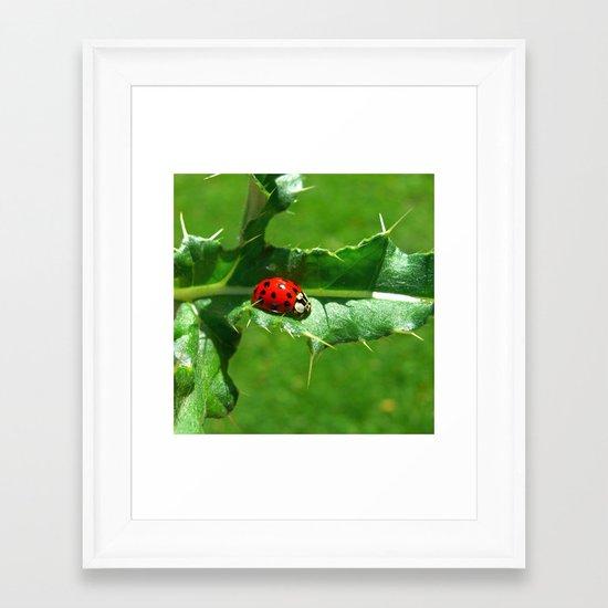 ladybug III Framed Art Print
