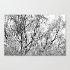 A tree and his crown in winter III Canvas Print