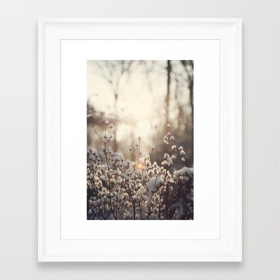 Northern Cotton Framed Art Print