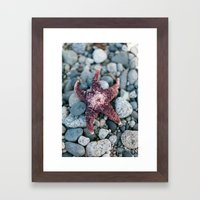 Sea Star Framed Art Print