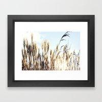 Sun Setting On Reeds Framed Art Print