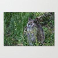 Wolf In Calgary Zoo Canvas Print