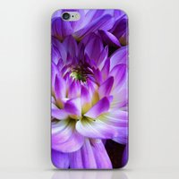 Dahlia - New World iPhone & iPod Skin