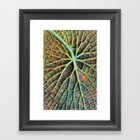 Lily Pad Framed Art Print