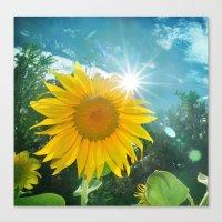 Sunflower. Vintage Canvas Print