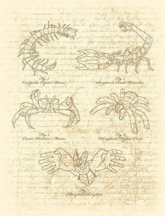 Manus Creatura Canvas Print